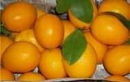 Лимоны Узбекистан, 400 р/кг